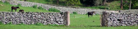 Puketutu Island Quarry
